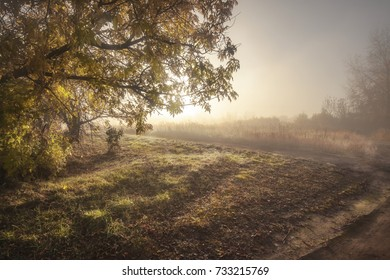 autumn view of the sun in the fog
