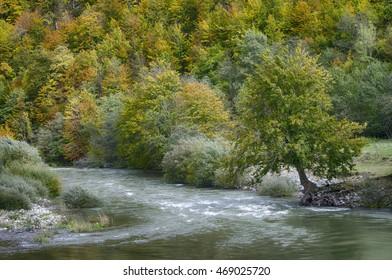 Autumn view of the Tara river. Montenegro.