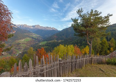 Autumn view of the Tires Valley with colorful trees and Catinaccio peaks profile in the background, Italy. Concept: autumnal Dolomite landscapes