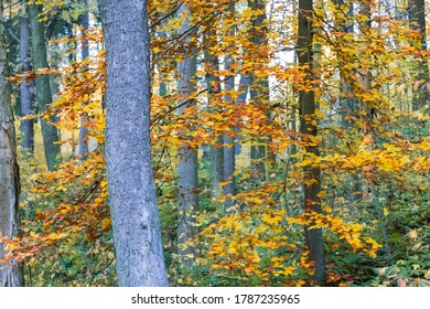 autumn view of the trees in the forest