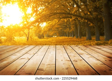 Autumn view of wooden floor and park with oak avenue and sunset on background