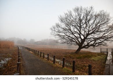 Autumn view-foggy autumn park alley with bare autumn trees and fallen leaves.Lonely walkway in the deserted park in the fog colored landscape. Morinji swamp, Tatebayashi, Gunma, JAPAN.