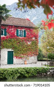 Autumn vine red and green leaves decorate stone wall of old rural country house with windows, wooden shutters, door and tile roof.