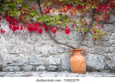 Autumn vine red and green leaves decorate stone wall. Bush growths from clay amphora near old rural country house.