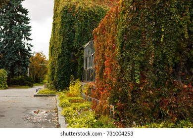 Autumn vine red and green leaves decorate stone wall and wooden door bush growths from clay