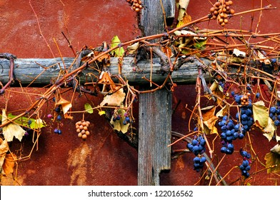 Autumn Vinery with Red GrapesTrellis