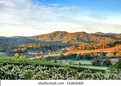 Autumn vineyard hills and flowers during sunset in Virginia