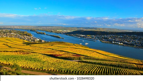 Autumn vineyard and Rhine river, Germany