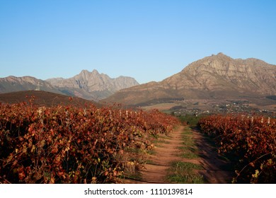 Autumn vineyard track with dramatic mountains in background