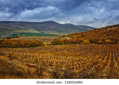 Autumn vineyard view with a rainy sky