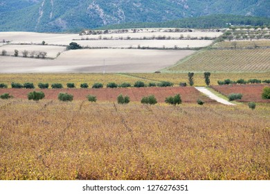 Autumn Vineyards and cellars in Fontanars dels Alforins and Moixent Valencia province Spain