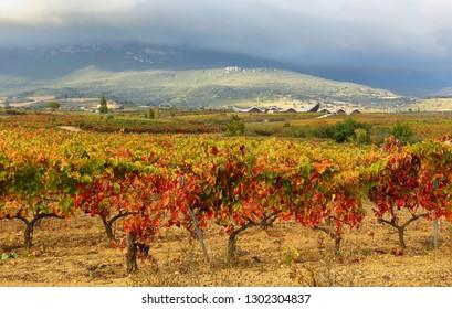 Autumn vineyards near LaGuardia, Alava, Spain