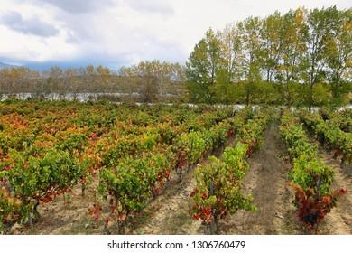 Autumn vineyards near LaGuardia with Prao de la paul laggon at background, Alava, Spain