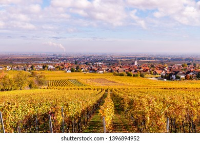 Autumn in Vineyards Palatinate region, German Wine Road, Rhineland Palatinate, Germany