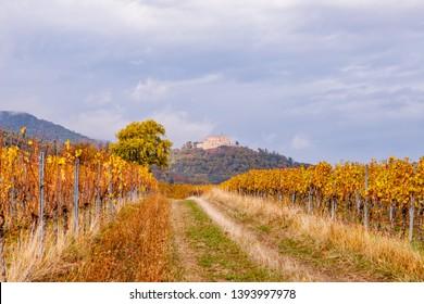 Autumn in Vineyards Palatinate region, Hambacher Schloss ( Hambach Castle ), Deutsche Weinstrasse ( German Wine Road ) Rhineland Palatinate, Germany