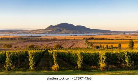 Viñedos de otoño bajo Palava cerca de Sonberk, Moravia del Sur, República Checa