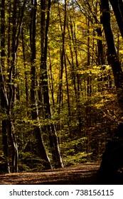 Autumn in Vitosha mountain, Bulgaria