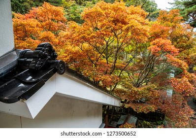 Autumn vivid color in a beautiful garden in Japanese style.