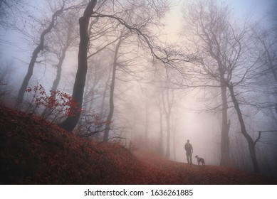 Autumn walk with a dog in a foggy forest, Ore mountain, Czech Republic.