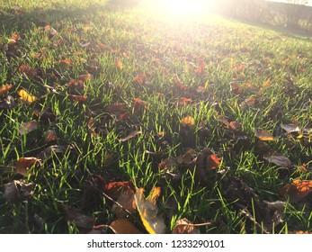 Autumn walk scene