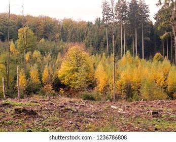 Autumn walk through the Teutoburg Forest near Bielefeld in Germany