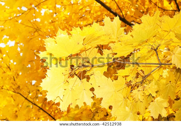 autumn walk... wow: excellent leaves background