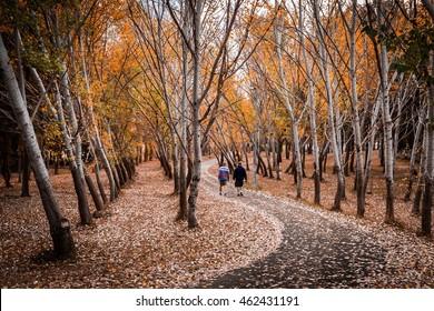 Autumn walks through Canberra's suburbs.