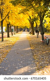 Autumn walkway in a city park with colorful trees