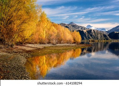 Autumn in wanaka lake , Yellow tree reflection in wanaka lake , Wanaka , New Zealand .