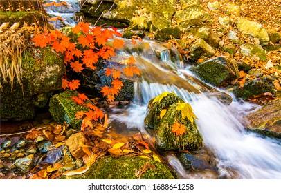 Autumn waterfall river stream view. Waterfall in autumn. Autumn waterfall leaves. Autumn waterfall leafs