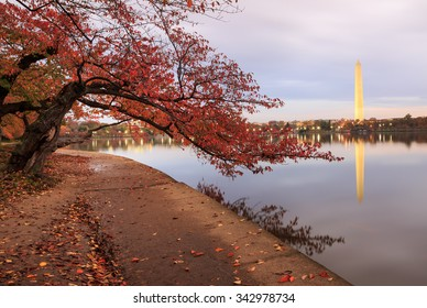 Autumn in West Potomac Park in Washington, DC where pedestrian trails wind under the famous cherry trees that surround the Tidal Basin and the Washington Monument reflects in the Potomac River.