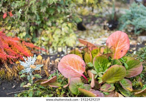 autumn-wet-leaves-herbaceous-medicinal-6