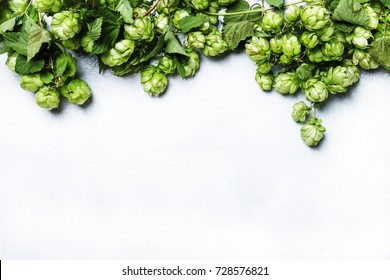 Autumn white background with green hop cones on the vine, top view