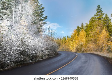 Autumn to winter season transition in one picture of a canadian forest