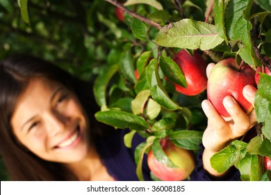 Autumn woman picking apple from tree. Shallow depth of field, focus on the apple.