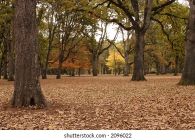 Autumn wooded setting.