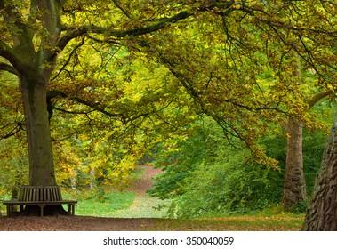 Autumn woodland, paths and bench. Thorpe Perrow Arboretum, North Yorkshire  England, 2015