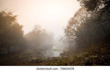 Autumn woodland scenery