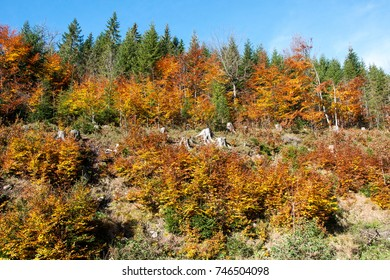 Autumn in the woods in the foothills of the Jeseniky Mountains, Northern Moravia Czech Republic