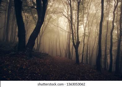 autumn woods landscape, old tree in fog