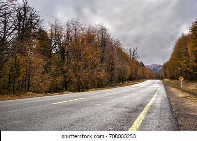 Autumn Woods on Cardenal Samore International Pass, formerly known as Puyehue Pass, Patagonia, Chile