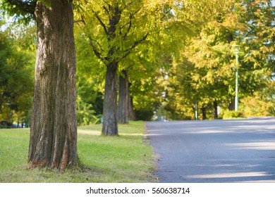 Autumn woods and walk of life
