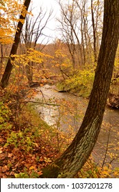 Autumn in the woods.  Yellows and orange colors with additional colors bursting throughout the image.  A river passed by a curved tree trunk.