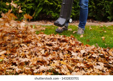 Autumn work in the garden. Cleaning the leaves with a blower.