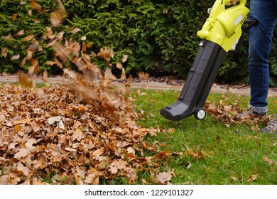 Autumn work in the garden. Scraping the leaves with the help of a blower.
