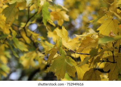 autumn, work of the photographer, nature; weather, leaves of trees