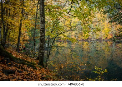 In the autumn at Yedigoller National Park
