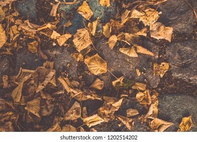 Autumn yellow foliage on the stone. Paving stone