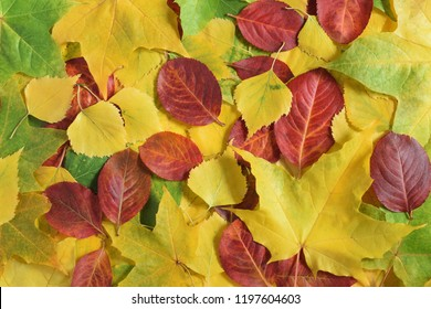 Autumn yellow and green leaves of maple, birch and quaking asp, red leaves of chokeberry. Soft sidelight.Nature background
