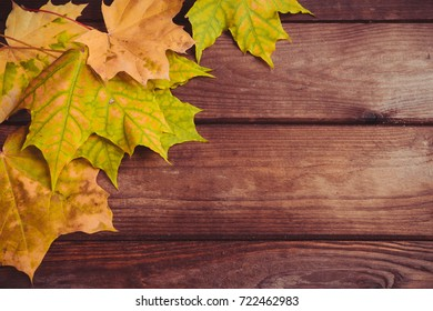 Autumn yellow green maple leaves and bunches of mountain ash on an old wooden background top view with copy space